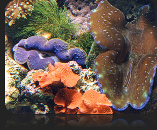 Saltwater Reef Aquariums