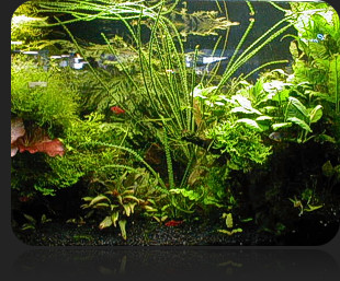 Keeping Live Plants in the Aquarium